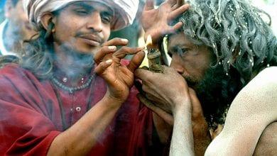 Photo of איך זה שקנאביס לא חוקי בהודו?