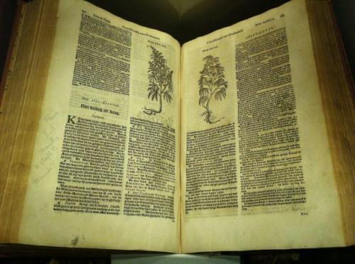 ספר בוטאני מהמאה ה-17