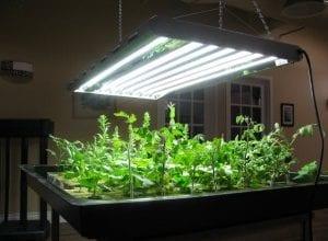 Photo of לראות את האור – מדריך תאורה בסיסי לגידול מריחואנה בבית