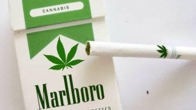Photo of האם חברות הטבק זוממות על שוק הקנאביס בוושינגטון וקולורדו?