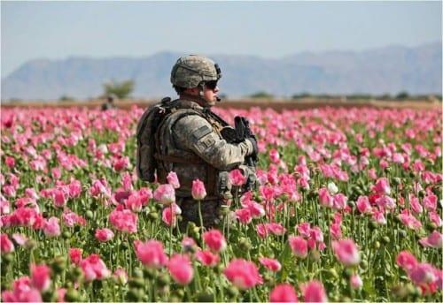 חייל אמריקאי בשדה פרג באפגניסטן.