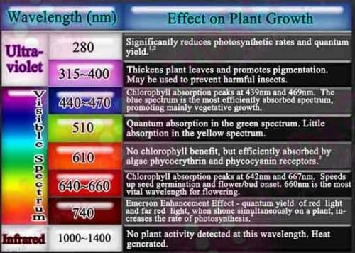 Effect of UVB rays on plants (0-400 nm)