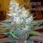 Blue Monster Hol