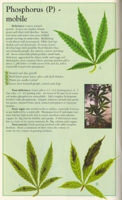 Cannabis and phosphorus