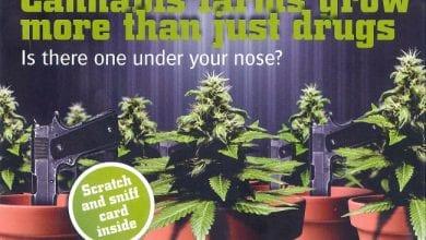 Photo of בריטניה: כרטיסי ריח חולקו לאזרחים לזיהוי בתי גידול מריחואנה