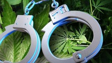 מעצרי מריחואנה