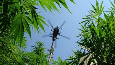 "Photo of ארה""ב: ירידה של 60% אחוז בעקירת שדות גידול מריחואנה"