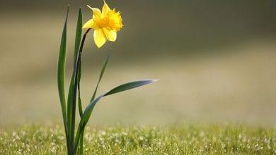 """Photo of """"רשיון להרוג"""": 6 צמחים רעילים במיוחד אך חוקיים לחלוטין"""