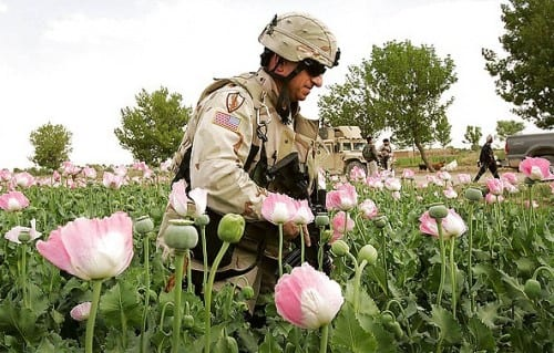 חייל אמריקני בשדות האופיום באפגניסטן