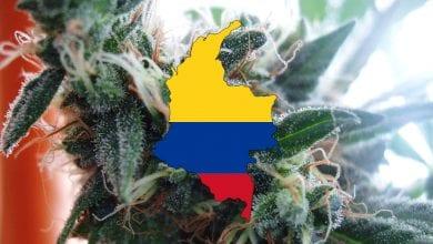 Photo of בוגוטה, קולומביה: טיפול למכורים לסמים באמצעות מריחואנה