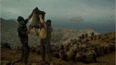 Trabajadores cargando Guano