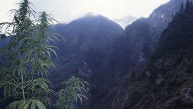 Photo of רוחות של גאנג'ה – על הכפר מלאנה שבהימאליה ההודית