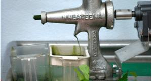 סחיטת מיץ קנאביס