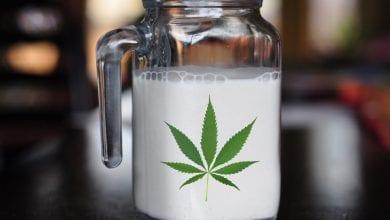 Photo of חלב המפ טבעוני – ותהיה לי בריא!