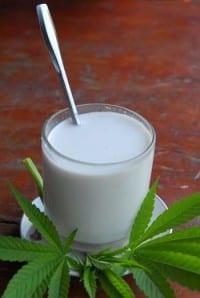 חלב קנבוס