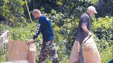 Photo of חוואי אמריקאי גידל 8,000 צמחי מריחואנה ונידון לעבודות שירות בלבד
