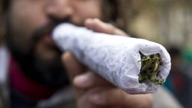 "Photo of דו""ח הסמים השנתי של האו""ם: יותר מגדלים מריחואנה בבית, חשיש קשה יותר להשגה"