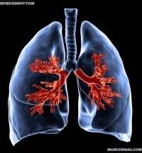 מה המריחואנה עושה לריאות שלכם?