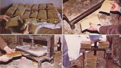 """The Great Cookbook"": Where is the best hashish in the world?"