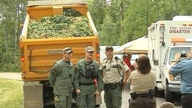 "Photo of ארה""ב: 5,000 שתילי מריחואנה נתגלו בשדה במינסוטה"