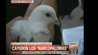 Photo of ארגנטינה: מבריחים מריחואנה בעזרת יונים