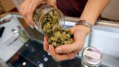 Cannabis medical patients