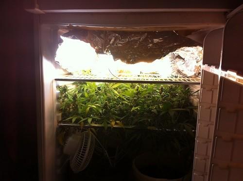 הבנות במקרר שהוסב לחדר גידול