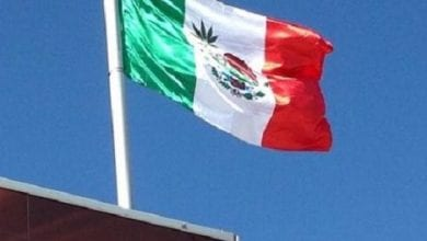 דגל מקסיקו עם עלה מריחואנה