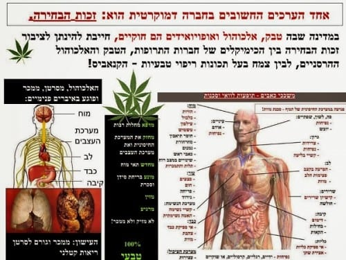 Cannabis alcohol of tabak