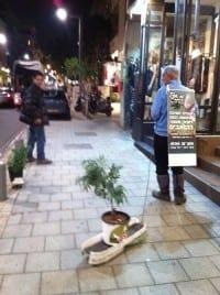 עציץ מריחואנה בתל אביב