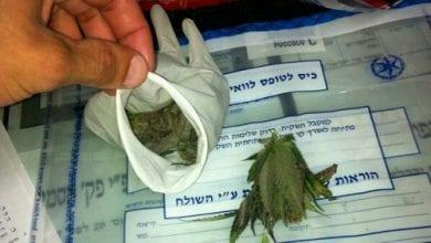 Photo of אילת: עובדי חוות קנאביס רפואי נתפסו עם כפפה ובה 42 גרם מריחואנה