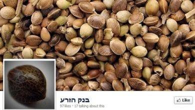 Photo of חדש בפייסבוק: בנק הזרע – זרעי קנאביס בחינם