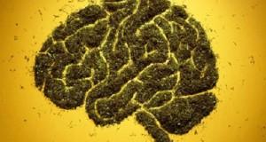 קנאביס שבץ מוחי
