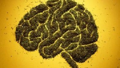 Photo of מחקר: קנאביס מתקן נזקים הנגרמים משבץ מוחי
