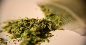 El cannabis es una droga?