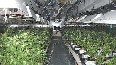 בית גידול מריחואנה בלגיה