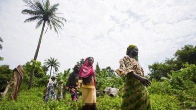 Photo of ניגריה: החקלאים נוטשים את גידולי המזון לטובת מריחואנה