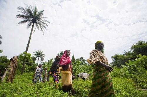 חקלאים ניגריה