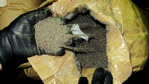 זרעי אופיום בסיביר