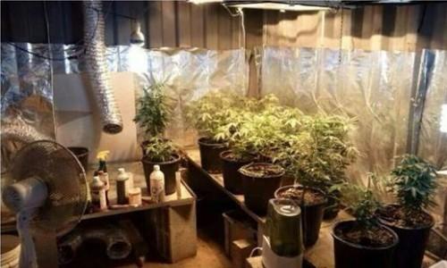 גידול מריחואנה במכולה - מושב דור