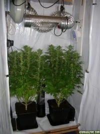 חדר גידול סטנדרטי: שני עציצים, מנורה, מאוור ומפוח
