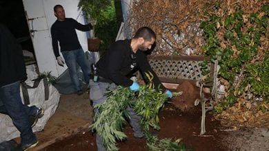 Photo of בני ברק: מאות שתילי מריחואנה נתפסו בדירה