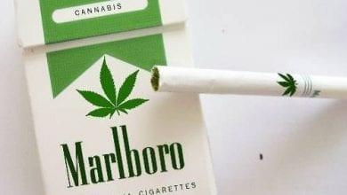 Photo of לא, פיליפ מוריס לא מתכננת לשווק סיגריות מריחואנה…