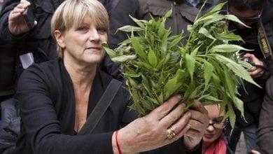 Photo of איטליה: פוליטיקאית תחלק מריחואנה שגידלה בביתה