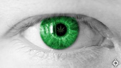 Photo of מחקר: רכיבים בקנאביס עשויים למנוע אובדן ראייה ועיוורון