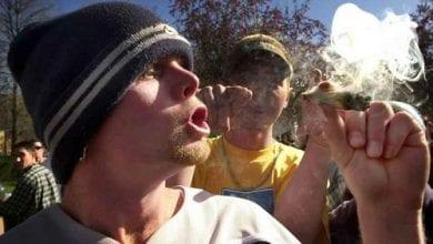 Photo of מחקר: למשתמשי מריחואנה יכולות קוגנטיביות טובות יותר