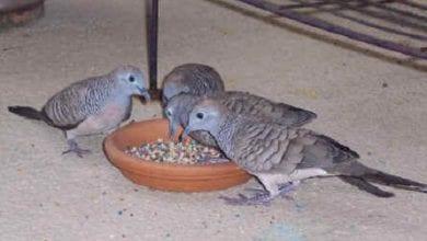 Photo of למען הלגליזציה: נותנים לציפורים לאכול זרעי קנאביס