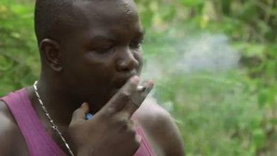 Photo of צפו: עסקי הגאנג'ה בג'מייקה