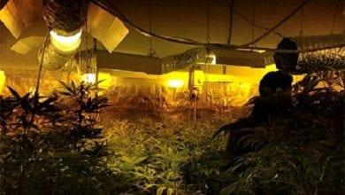 Photo of פתח תקווה: 120 שתילי מריחואנה נתפסו בדירה בעיר