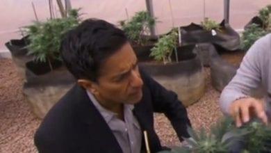 סנג'י גופטה האם מריחואנה מובילה לסמים קשים